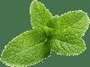 Zelena Meta